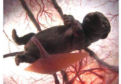 Peter Chinn i Nacionalna Geografija: Nevjerovatne fotografije mladunaca u materici