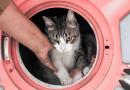 Najčudnije kućice za mačke na svijetu